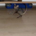 Nela w nowym domu